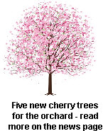 Five new cherry trees for the orchard - read more on the news page